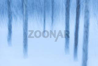 Birken im Schnee, Wischeffekt, abstrakt, Lappland