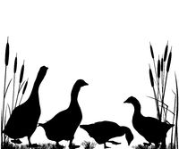 Reeds and goose silhouettes