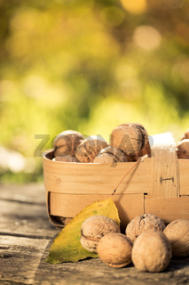 Basket of nuts in autumn