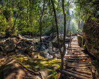Sunny day at tropical rain forest landscape with wooden bridge and river near Kulen waterfall in Cambodia