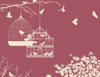 Birds and birdcages postcard 10