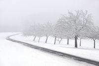 Snowy fruit trees with fog