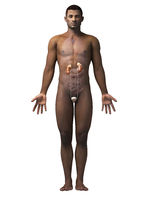 african-american anatomy