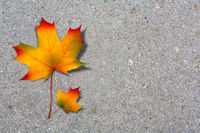 Autumn maple leaf on old paved road