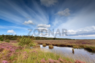 blue sky over swamp with heather