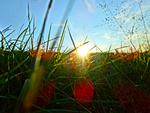 Green grass and blue sky with sunset