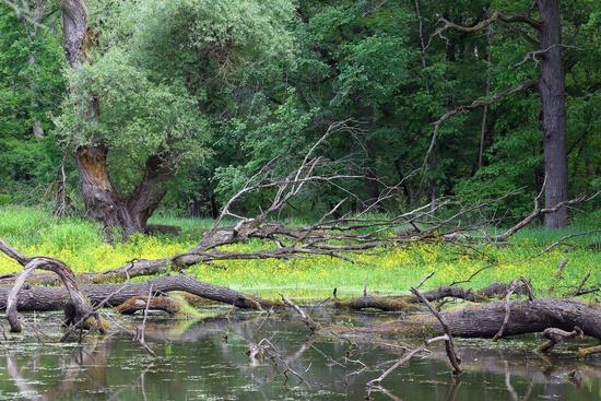 Oxbow lake, Floodplain Forest Nat. Park, Austria