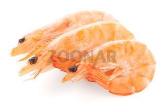 Three shrimps
