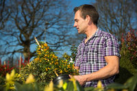 Man looks at bush full of berries in nursery