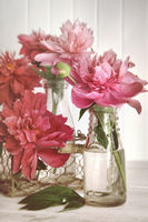 Pink peonies in milk bottles