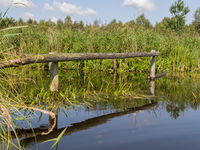 Reflection of wooden poles