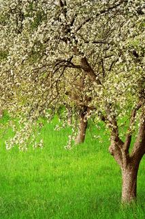 Frühlingstage