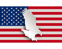 Weisskopfseeadler - Bold eagle