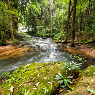 Tropical rainforest landscape with flowing river