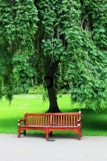 Tree with bench and green grass