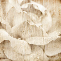 Grunge wooden texture with floral background with soft selective focus, shallow depth of field.  Macro shot of beautiful cream rose flower with water drops