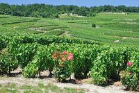 F--Champagne bei Epernay.jpg