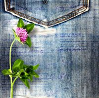 Beautiful pink clover on old jeans background
