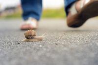 Snail in Danger