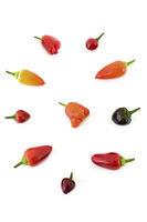 chili pepper - Capsicum