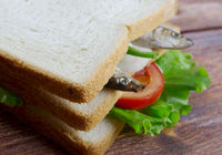 sandwiches with anchovies