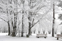 Snow covered park bench and wintry forest