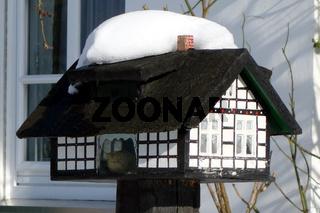 sauerland vogelhaus.jpg