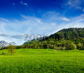 Alpine meadow in Bavarian Alps. Bavaria