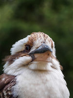 portrait of indonesian bird