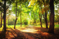 Sunny day at autumn park with colorful trees and pathway