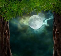 Fabulous night scenery, ancient trees, the bright moon