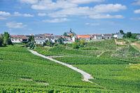 Cramant near Epernay,Champagne region