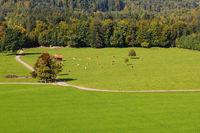 Cattle pasture near Bad Toelz