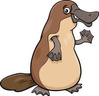 platypus animal cartoon illustration