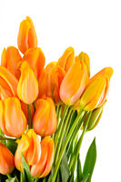 Spring flowers yellow and orange tulips