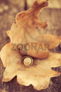 Oak acorns on wooden table