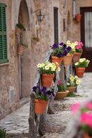 Row of flowerpots lining a street