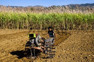 Junge mit Einachstraktor bei Feldarbeiten auf Zuckerrohrfeld bei Nyaung Shwe am Inle See, Shan-Staat, Myanmar, Asien