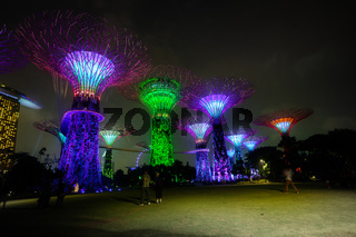 Towers of Gardens by the Bay in Singapore at Night