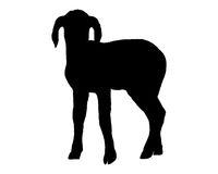 Lamm - Lamb on white
