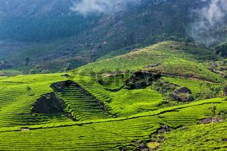 Kerala India travel background - green tea plantations in Munnar