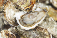 Oysters background