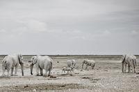 Nashorn und Elefanten