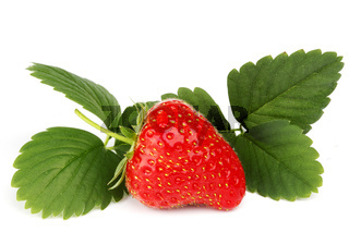 Strawberry with leaves