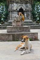 Monkey ahd dog