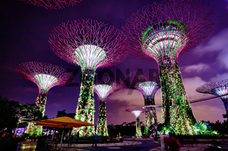 Colorful Towers of Gardens by the Bay in Singapore at Night