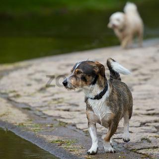 Hunde am Ufer