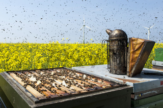 Imkerpfeie auf Bienenkasten am Rapsfeld mit Bienenschwarm