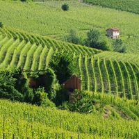Langhe Weinberge - langhe vineyards 03