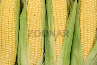 Mais auf Maiskolben